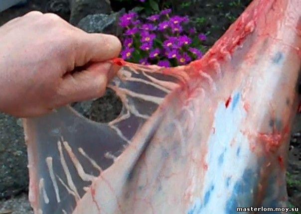 Выделка шкур кролика - срезание жира со шкурки