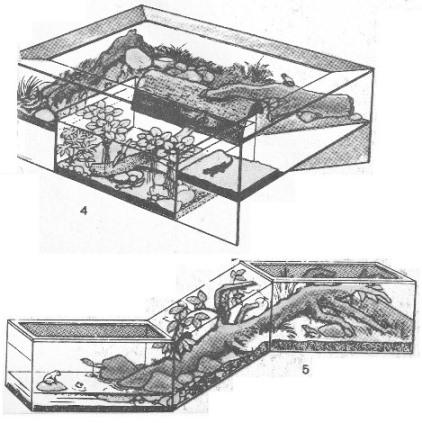 террариум, акватеррариум