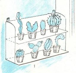 кактусы, выращивание, уход
